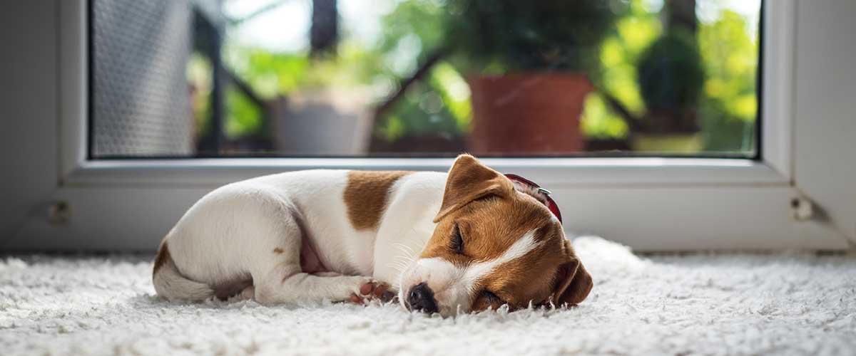 Pet, Dog & Puppy Visits
